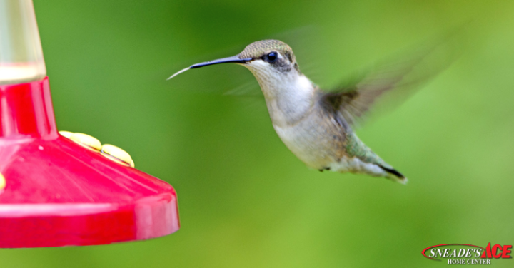 Humming Birds Featured Image