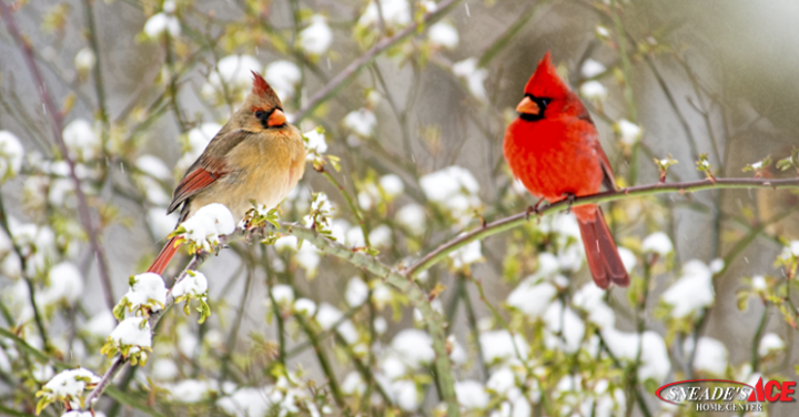 Cardinals Bring On the Color Featured Image