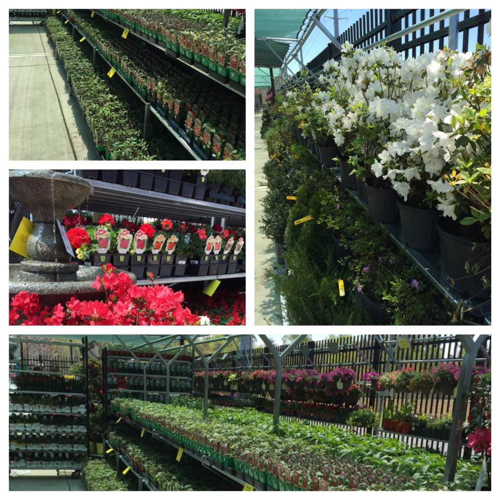 New Plants and Flowers Have Arrived at Sneades Ace Garden Center