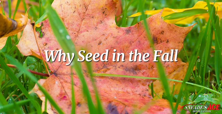 Why Seed Your Lawn in the Fall Featured