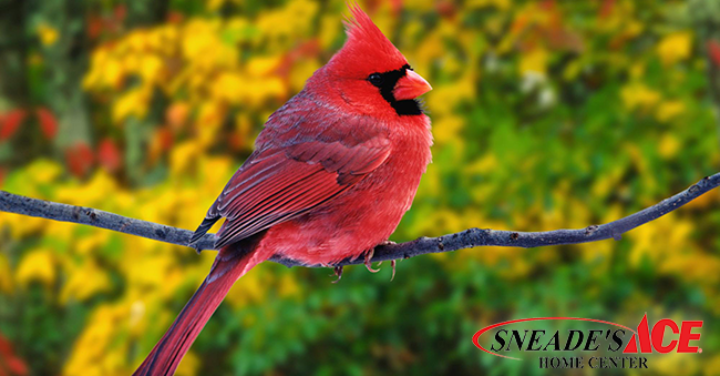 Expert Tips, How to Attract Birds this Winter