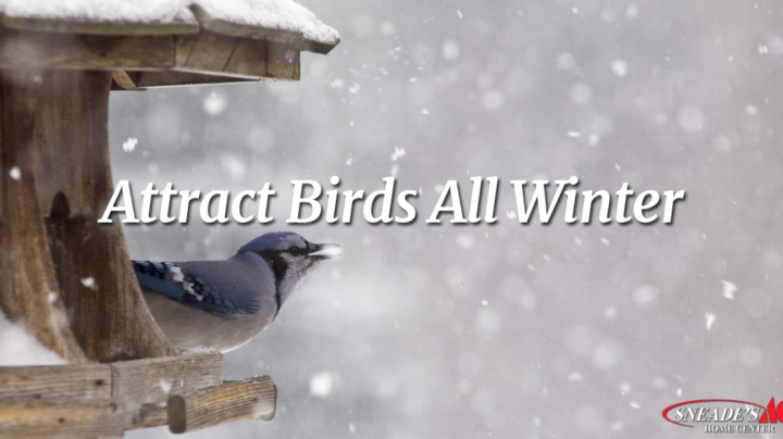 how to attract birds this winter facebook