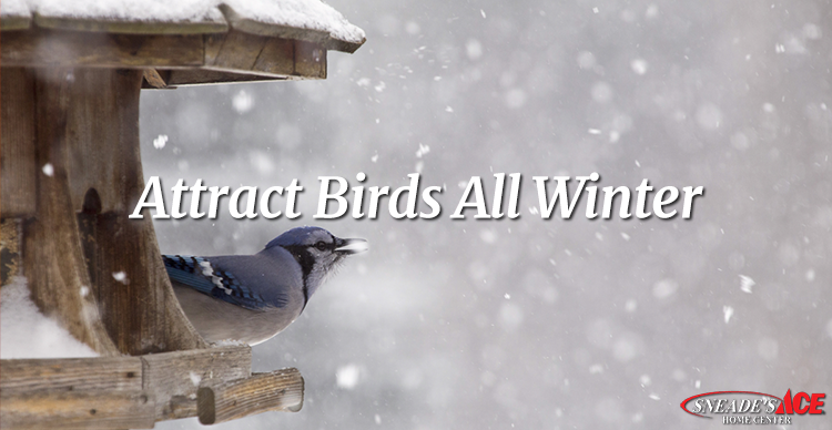 how to attract birds this winter featured