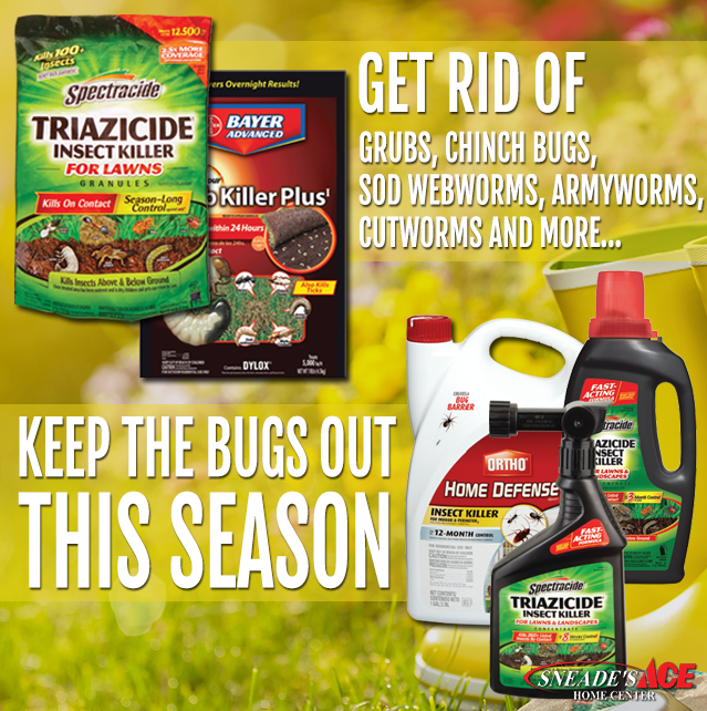 Keep the Pests Our of Your Lawn Featured Image