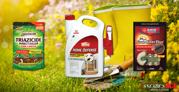 Keep the Pests Our of Your Lawn Featured