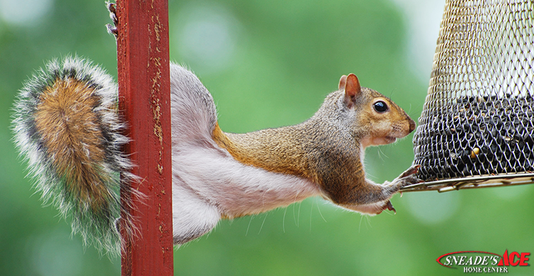 Squirrel Proofing Tips featured image