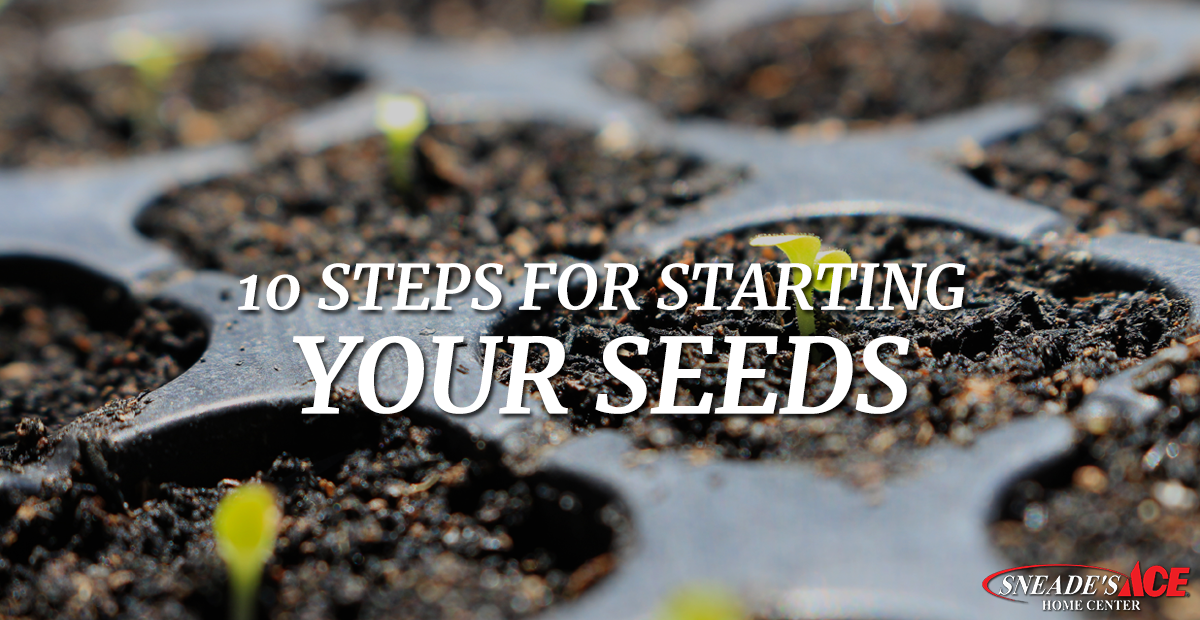 10 Steps To Starting Seeds Sneade S Ace Home Centers