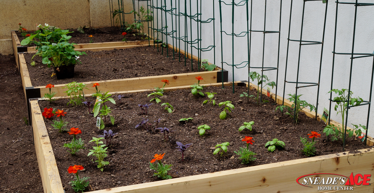 The Benefits Of Raised Garden Beds Sneade S Ace Home Centers